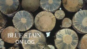 noda blue stain pada kayu