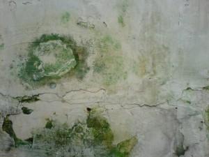 Jamur merupakan salah satu kingdom dalam klasifikasi makhluk hidup.