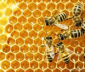 Beeswax adalah lilin lebah madu yang memiliki banyak manfaat bagi manusia.