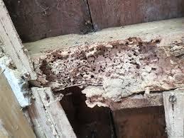 Kerusakan akibat kumbang Deathwatch bisa sebabkan kerugian besar.